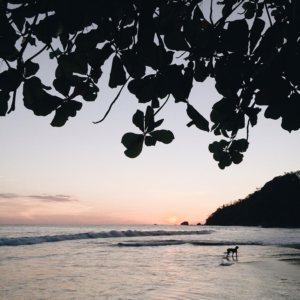 Style Bee - Costa Rica
